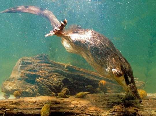 Под водой человек не дышит, так что растворенные в ней пахучие вещества не попадают на его обонятельные рецепторы.