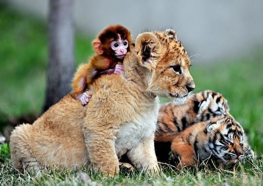 Все маленькие милые и доброжелательные.