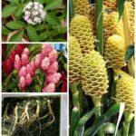 Как выглядят растения, у которых мы едим только «подземные» части