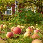 Штрафы вместо яблок