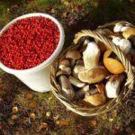 Россияне могут собирать грибы и ягоды везде