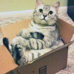 Наука о кошках и их любви к коробкам