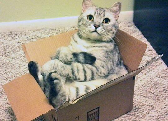 Кошек тянет к коробкам, это может подтвердить любой любитель кошек. Но почему? На самом деле никто не знает.