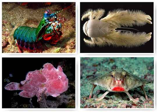 За последние 100 лет, по данным ООН, некоторые виды рыб, среди которых треска и тунец, были выловлены на 90%