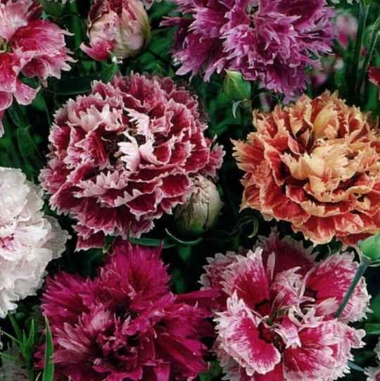 Ноевский сад с давних времен славился цветоводством.