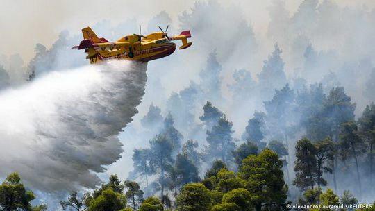 С начала года при лесных пожарах в Греции выжжено 114,3 тысячи гектаров, более половины пришлись на остров Эвбея.