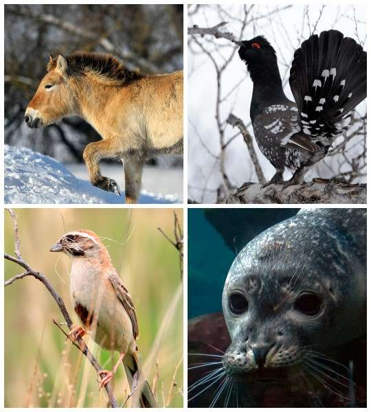 По подсчетам Минприроды, 11 объектов животного мира в России считаются вероятно исчезнувшими