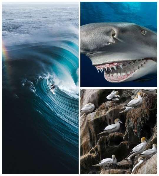 Фотоконкурс Ocean Photography Awards — это прославление нашей прекрасной голубой планеты, а также платформа, на которой можно рассказать о трудностях, с которыми она сталкивается.
